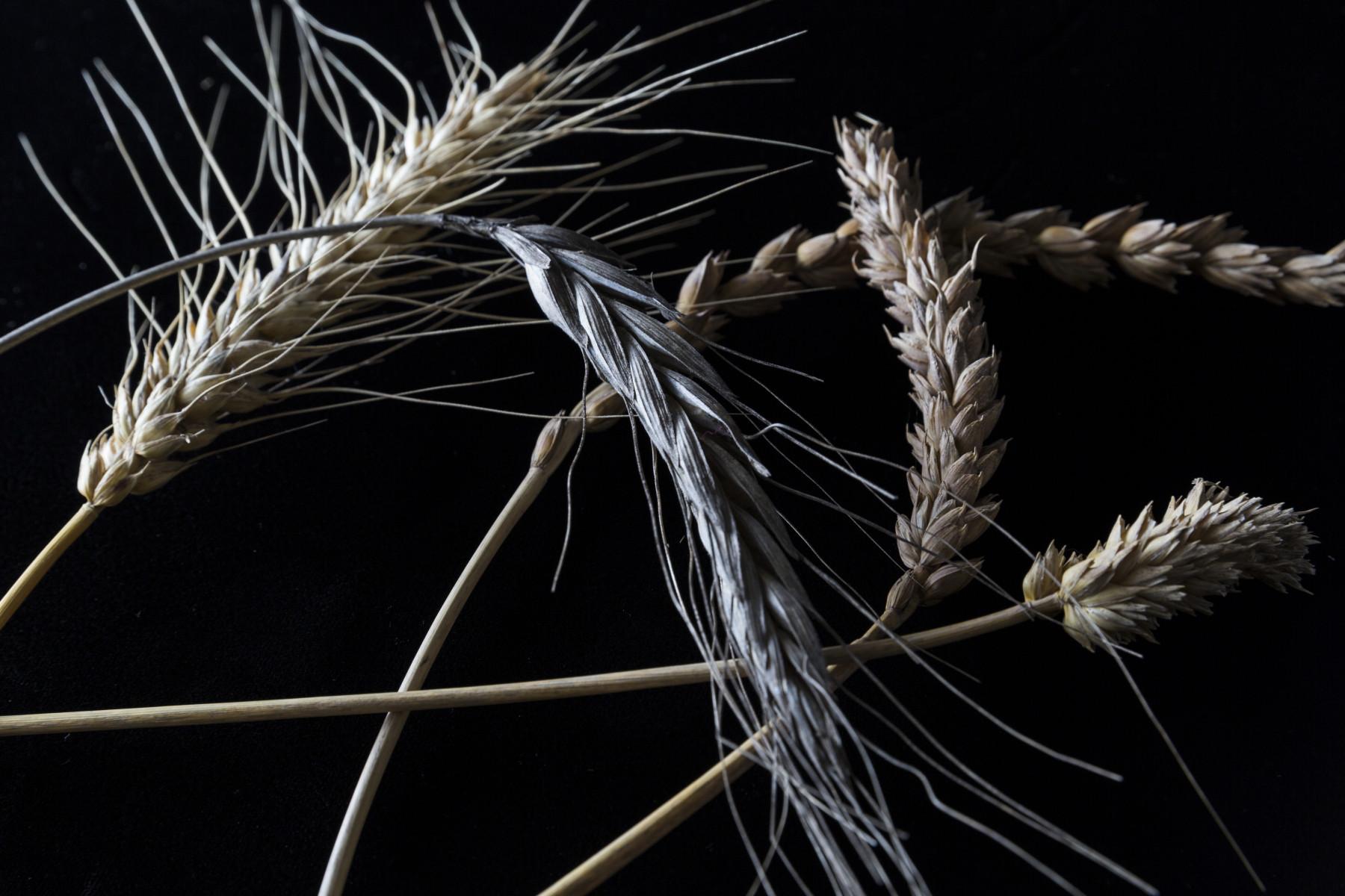 Bread_Grain_00034