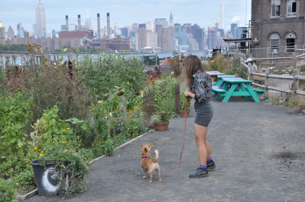 Emma and Jam wander the plots at North Brooklyn Farms (Jordan Werner Barry)
