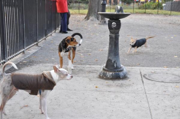 Baxter making friends at the Maria Hernandez Dog Park (Jordan Werner Barry)