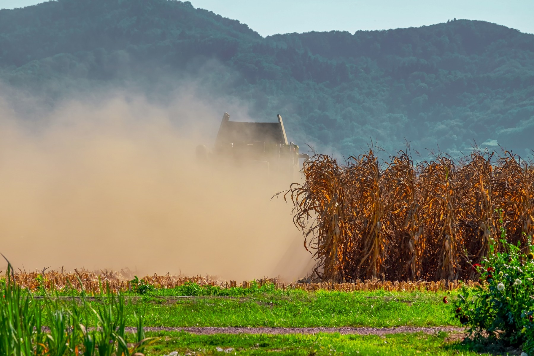 agriculture-3680965_1920