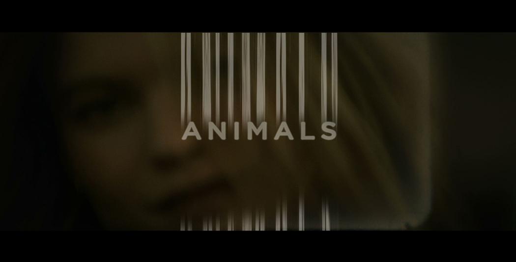 Animals_featured