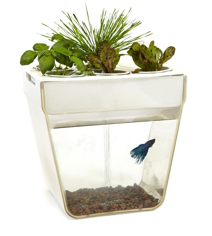 Aqua Farm - Self-cleaning fish tank that grows food