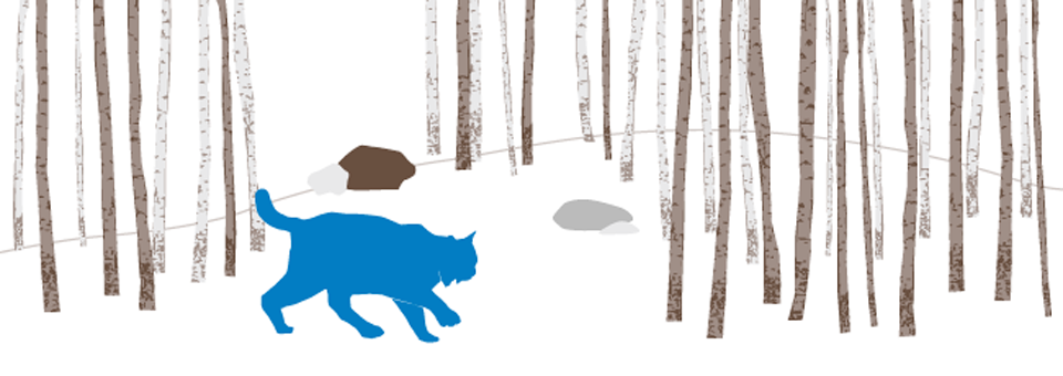 Aspen trees and Lynx graphic