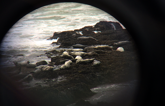 Elephant seals, loungin'.