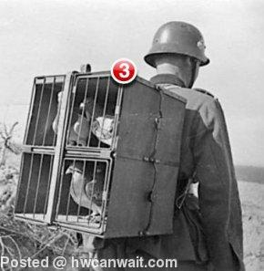 3 unread carrier pigeons