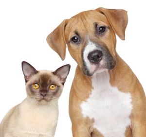 Happy dog and cat