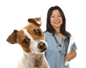 Dog with doctor