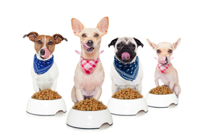 4 dogs sitting in front of their food bowls