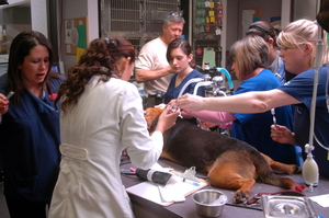 veterinarians and trauma nurses with an emergency