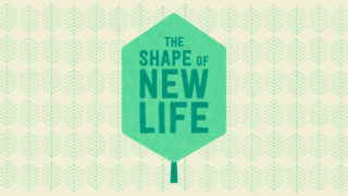 New Web Teaser 700X394 The Shape Of New Life