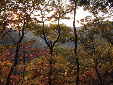 Kanawha state forest david bennett
