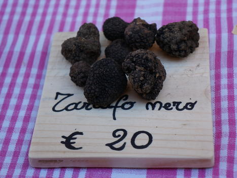 The Ultimate Foodie Adventure: Truffle Hunting in Italy