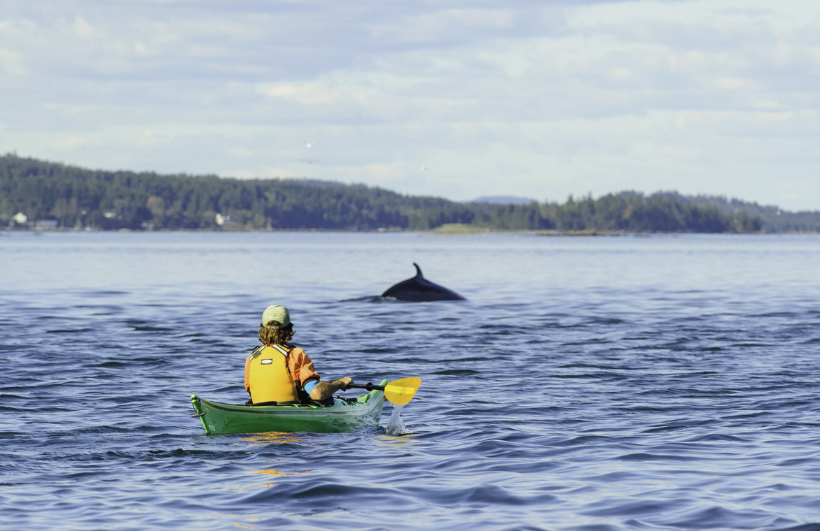 Photo Credit: Seascape Kayak Tours