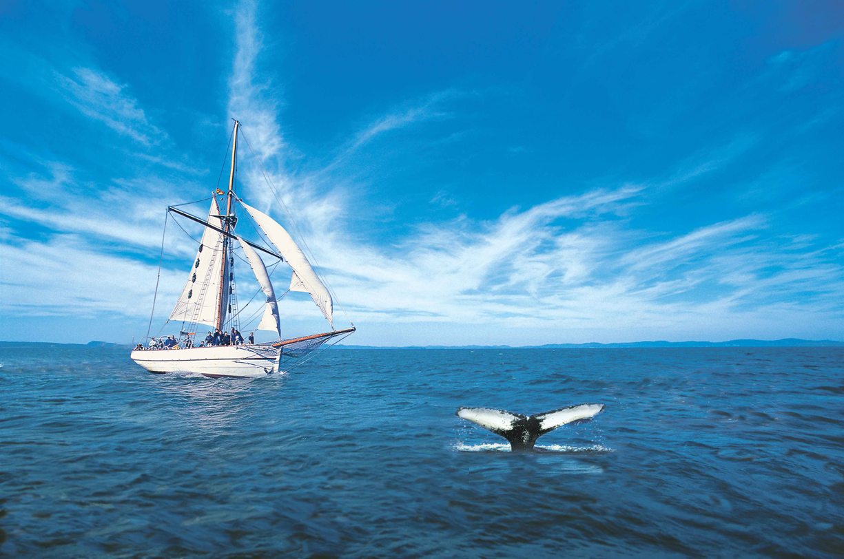 Photo Credit: Whales-n-Sails