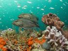 Georgia aquarium  noaa national ocean service
