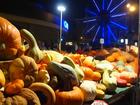 Pumpkin show  vasenkaphotography