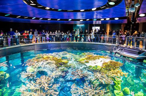 48 hours in boston New england aquarium tickets