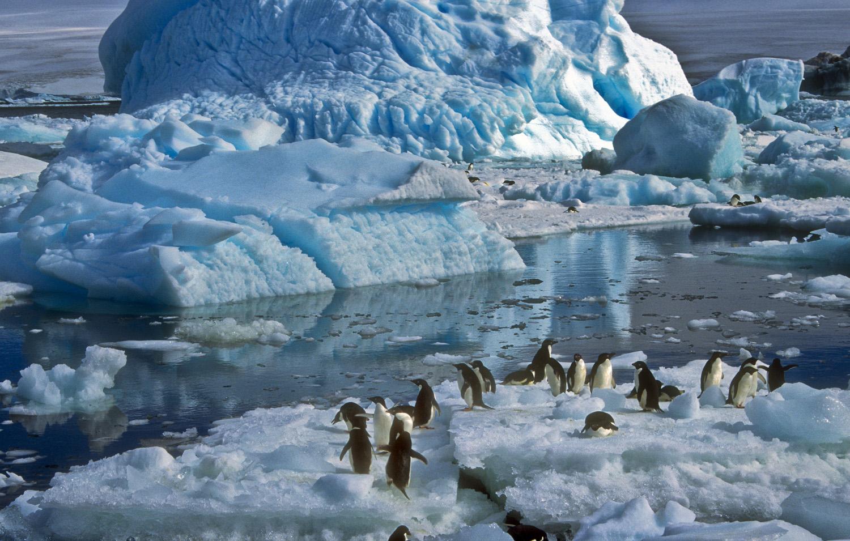 advocates for travel to the polar region