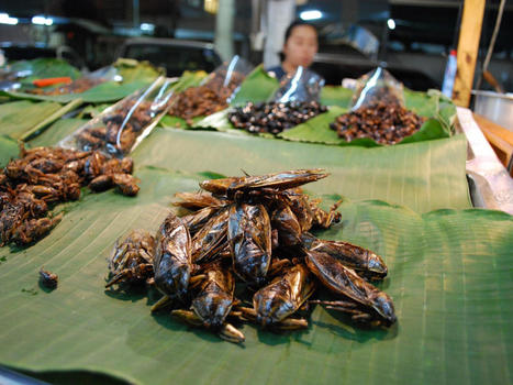 Bugging Out: 5 Countries that Treat Bugs like Delicacies