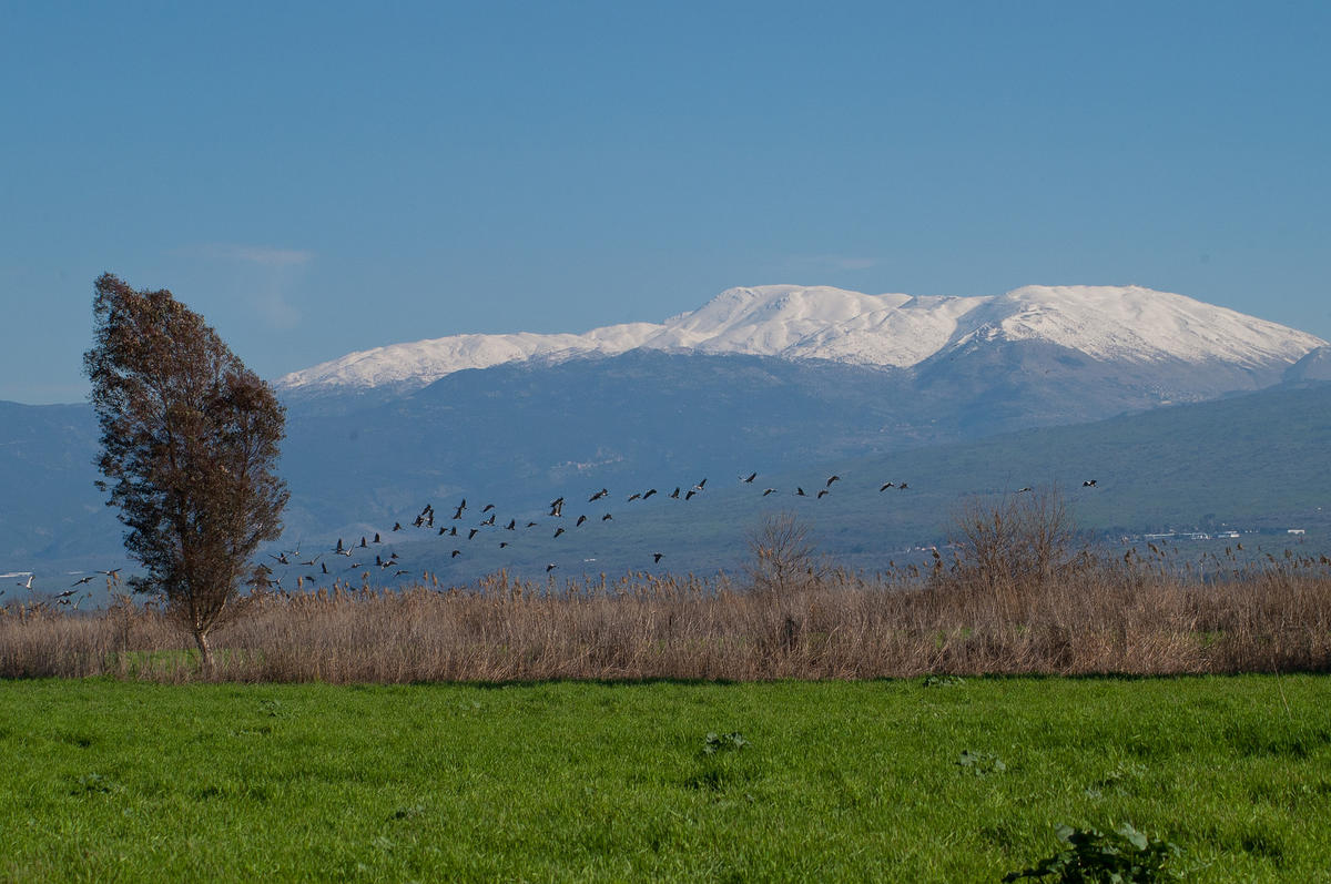 """Mt. Hermon from Agamon HaHula"" by Flavio via Flickr Creative Commons"