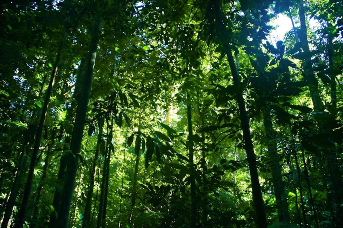 """Rainforest"" by Ben Britten via Flickr Creative Commons"