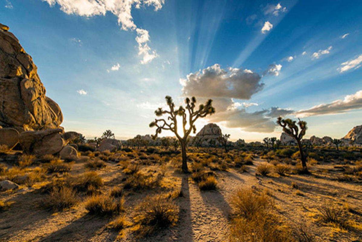 Christopher Michel Follow Joshua Tree Magic