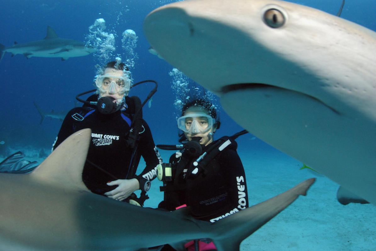 """Shark Dive--Bahams' by Dan Theurer via Flickr Creative Commons"
