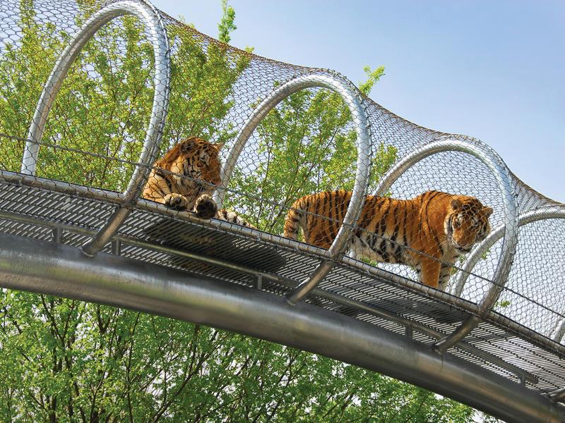 Zoo360 tigers highres philadelphiazoo