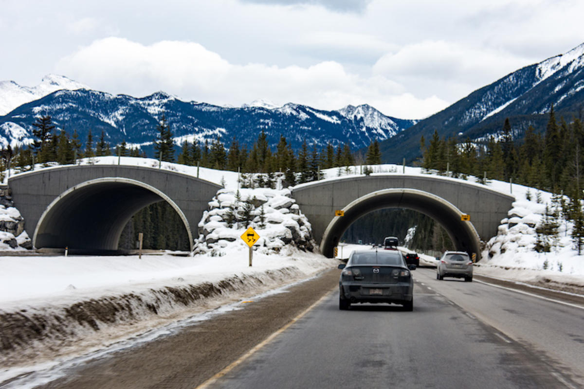 """""""Animal Crossing - Banff National Park & Trans Canada Highway"""" by M01229 via Flickr Creative Commons"""