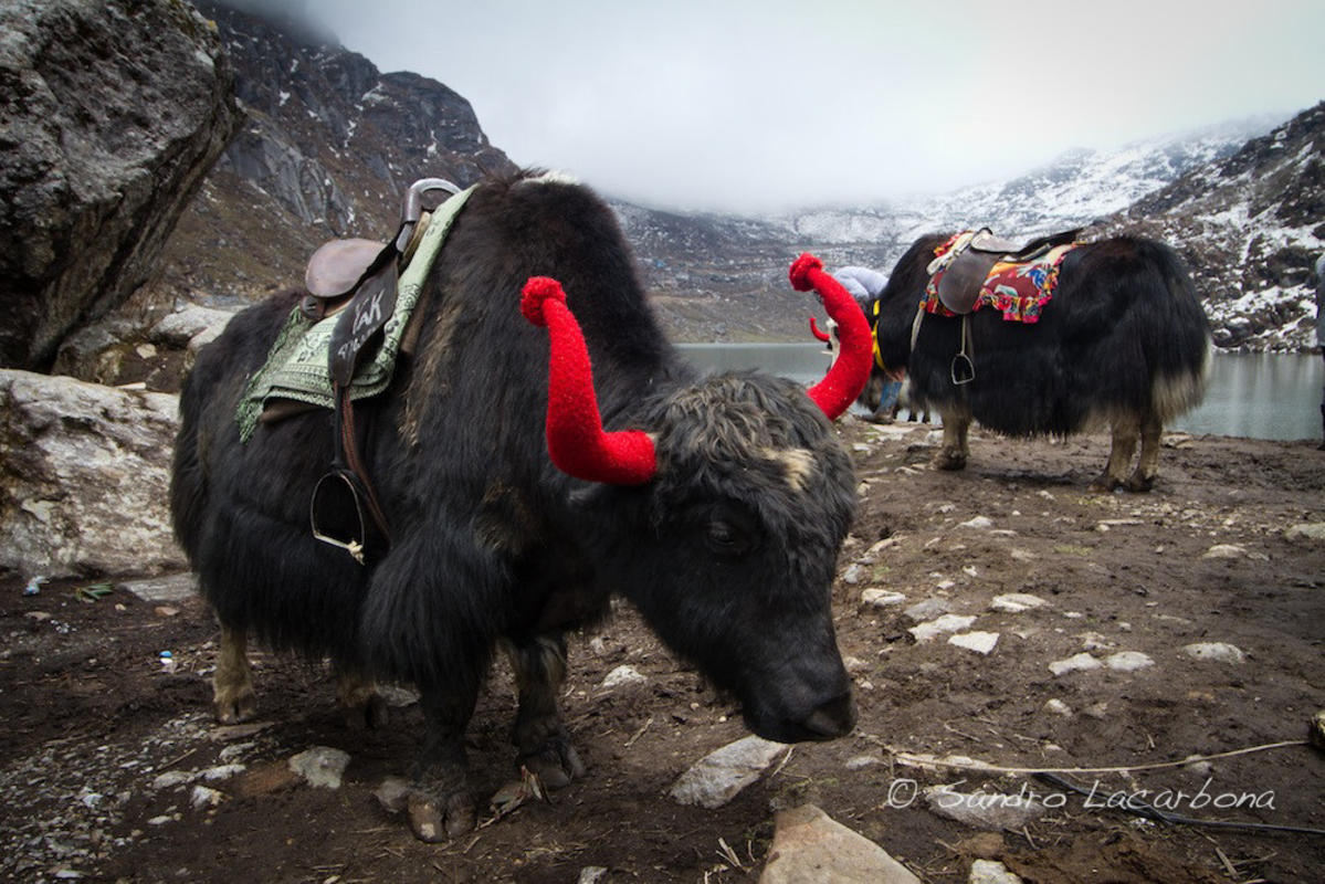 """Yaks at the Tsomgo Lake"" by Sandro Lacarbona via Flickr Creative Commons"