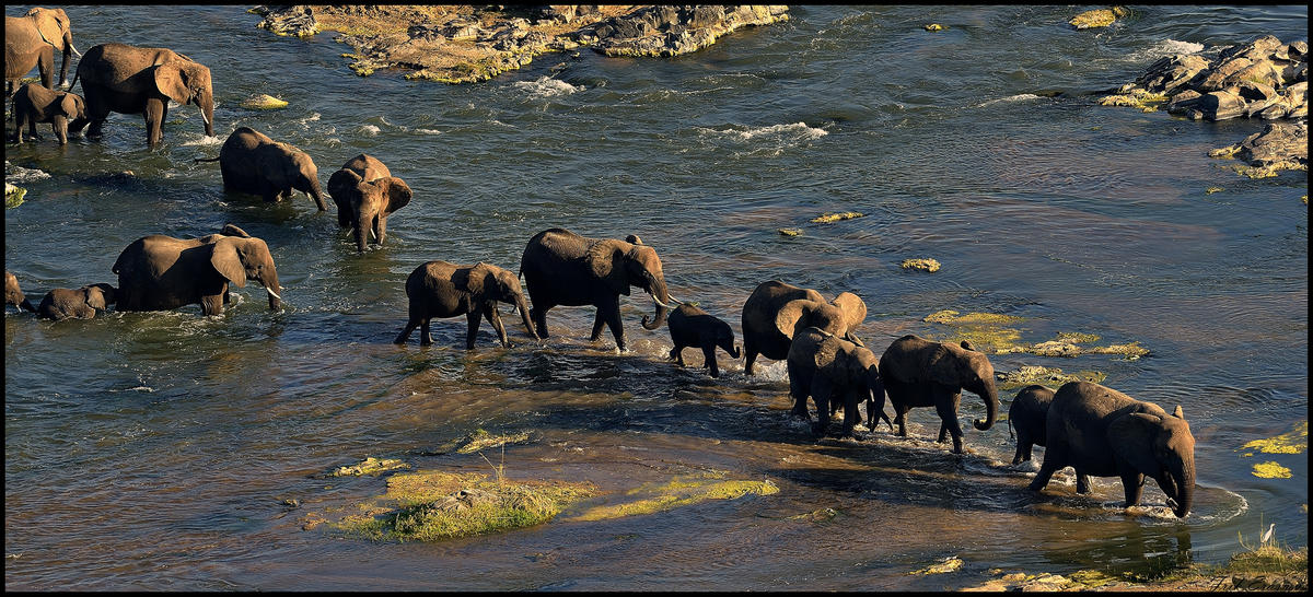 """Elephant Crossing The Olifants River"" by Frik Erasmus via Flickr Creative Commons"