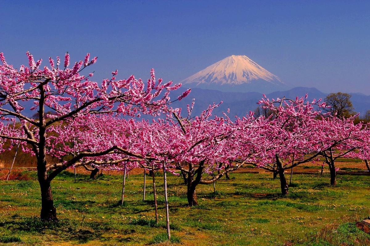 Photo Credit: Yamanashi Tourism Organization / JNTO