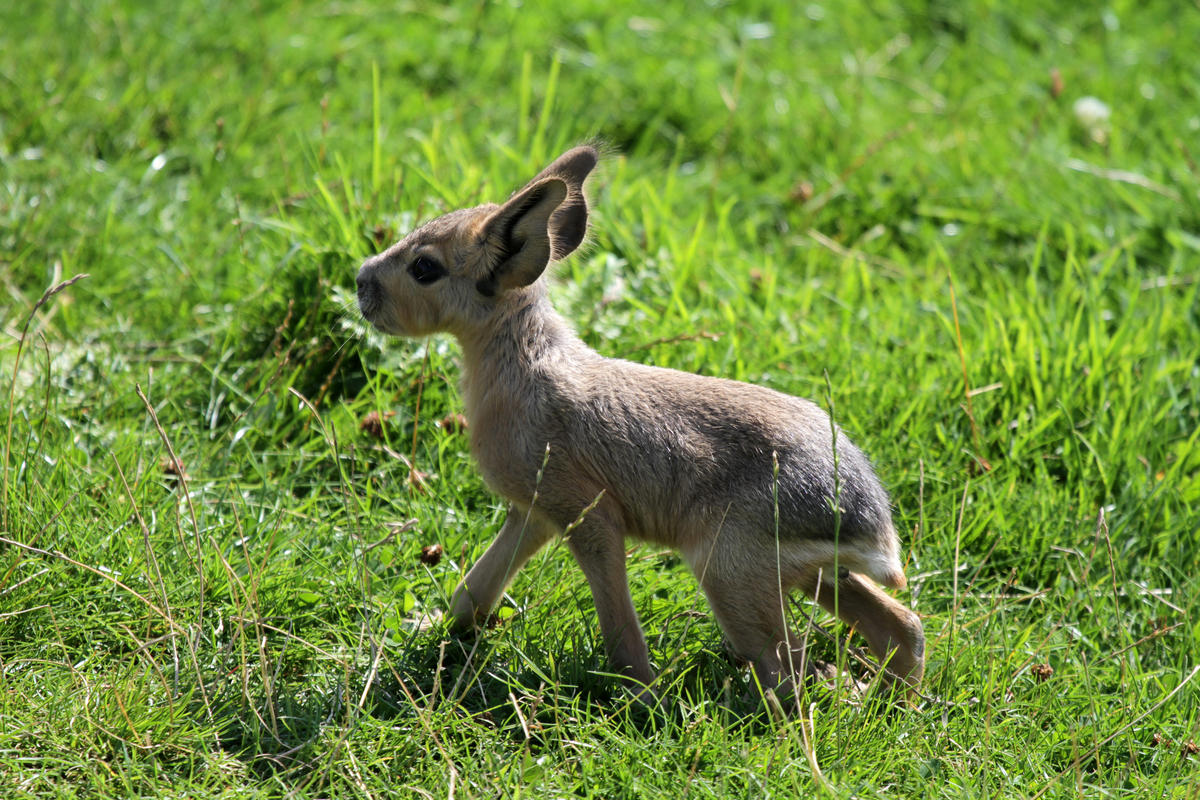 Young Mara by Valentina Storti via Flickr Creative Commons