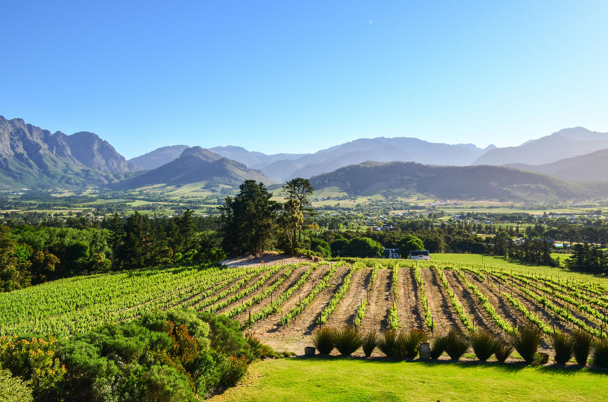Vinyards of South Africa by jbdodane via Flickr Creative Commons