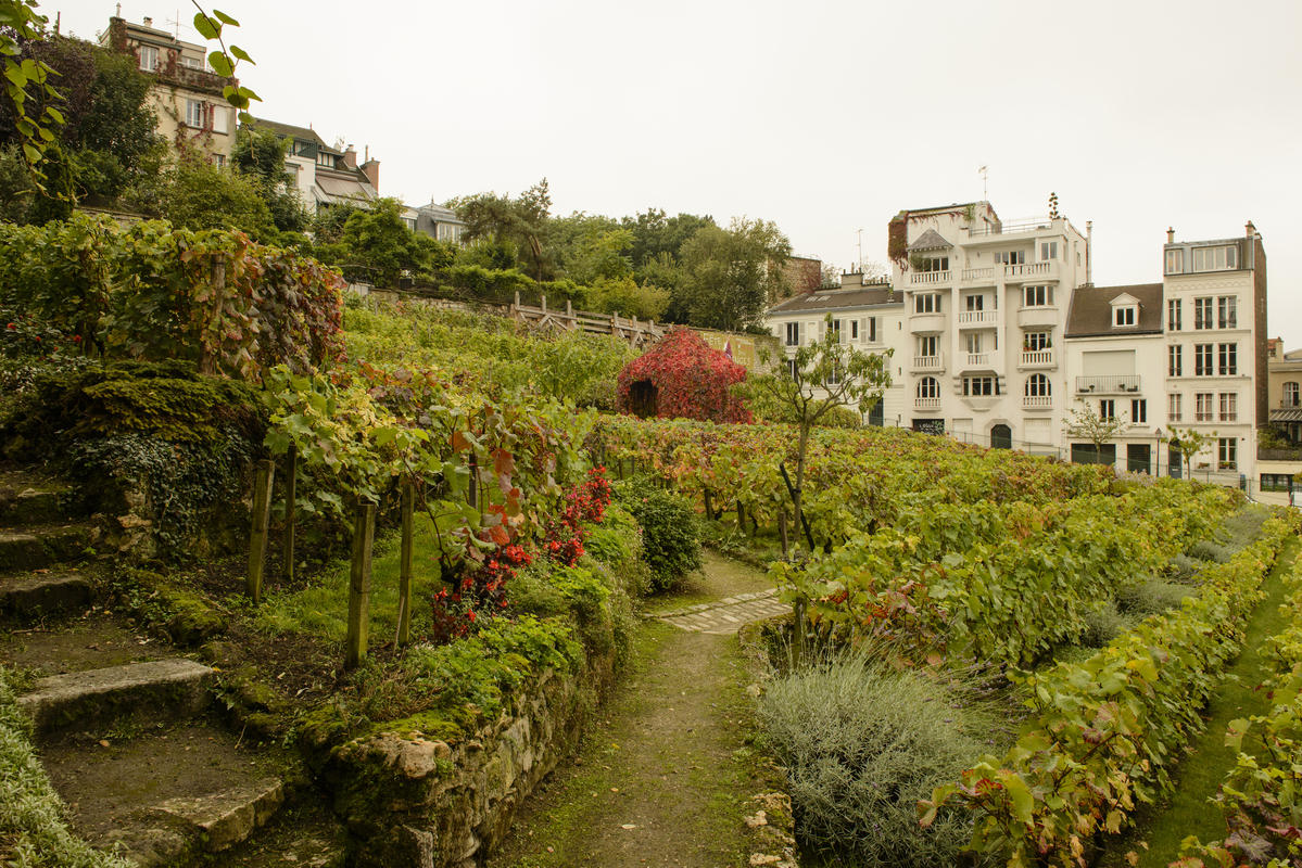 Clos Montmartre 1 by Son of Groucho via Flickr Creative Commons