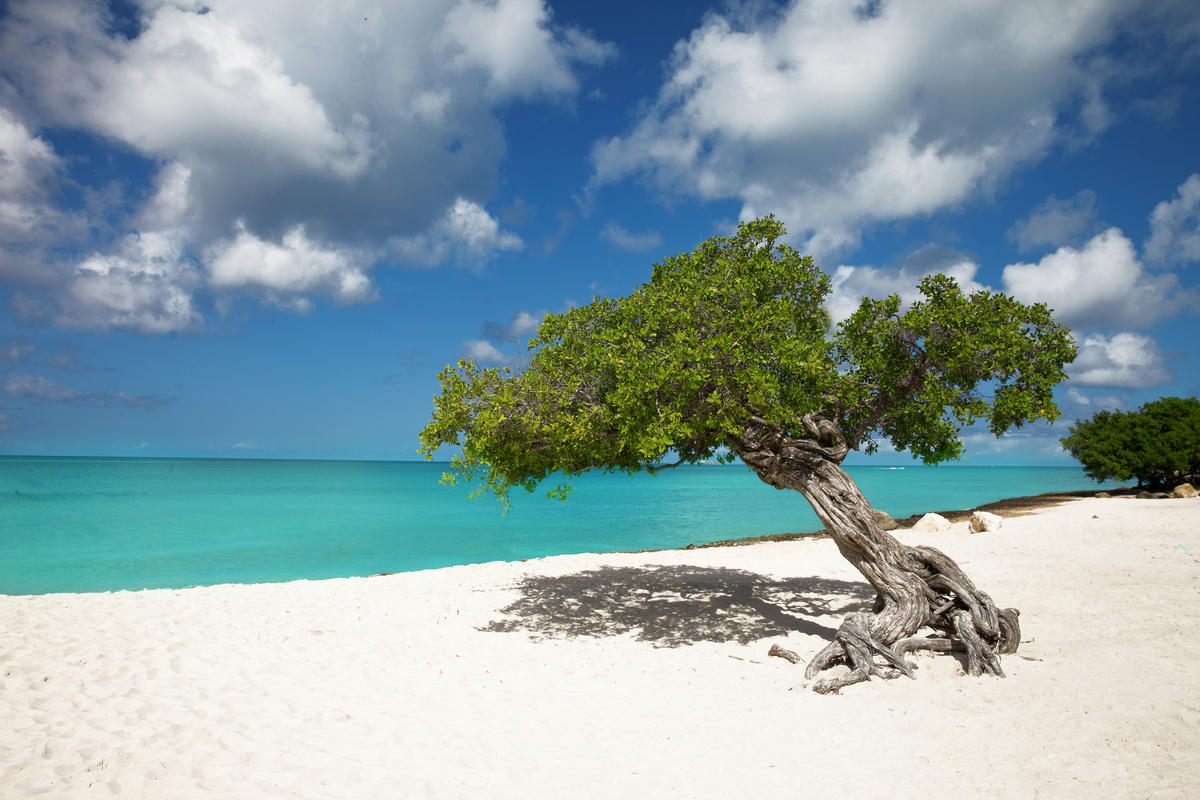 """Tropical Paradise"", Aruba, Eagle Beach, Divi Divi Trees by Chris Ford via Flickr Creative Commons"