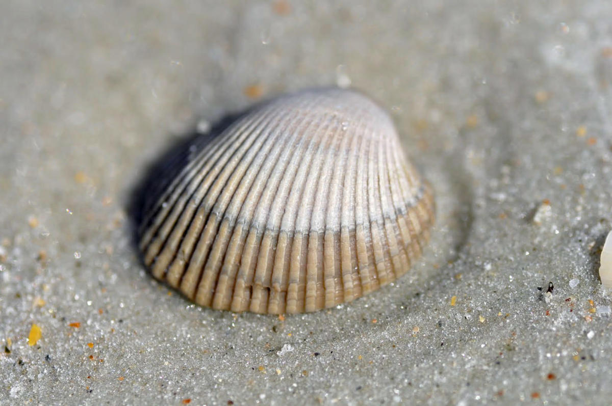 """Seashell"" by Heather Paul via Flickr Creative Commons"
