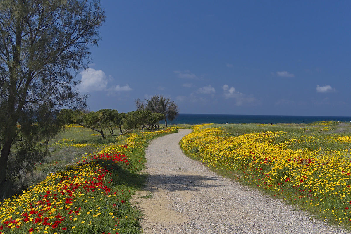 Path to the sea Photo by Oleg via Flickr Creative Commons