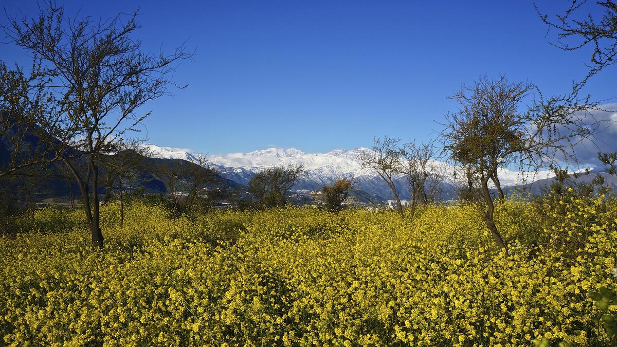 Santiago de Chile, Spring 2013 Photo by alobos Life via Flickr Creative Commons