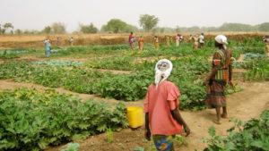 Comunidade na agroecologia