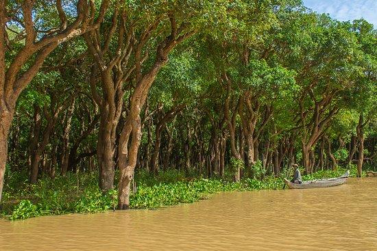 Floresta alagadas