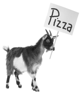 Pizza_goat_6dea80a0e12b1bc8e326502452579c39