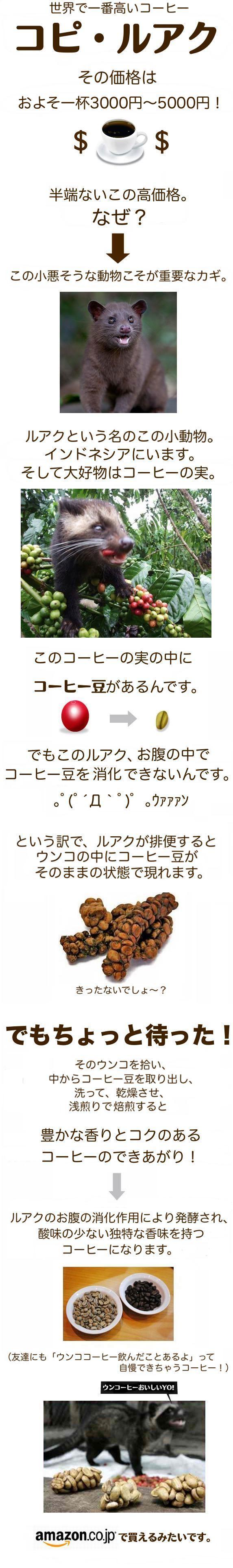 kopi_image