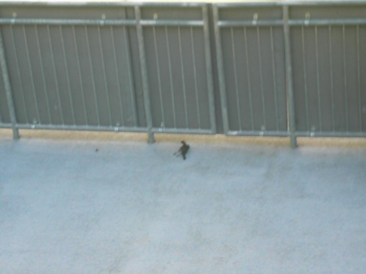 Dead bird.  Suck it.