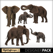 Elephantfamily-1_medium