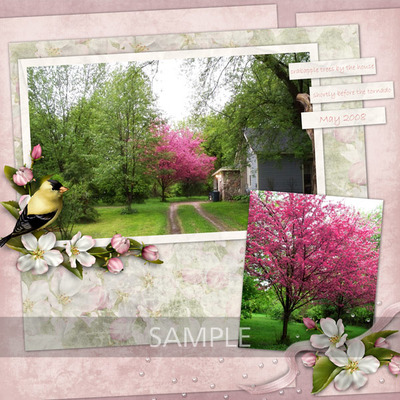 Springsongbirds_layout