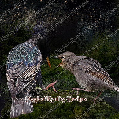Magicalreality_paintedbirds3