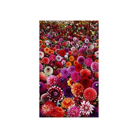 Digital Garden Packed Flower Multi Fabric