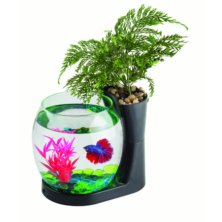 Blue Planet Betta Planter Black