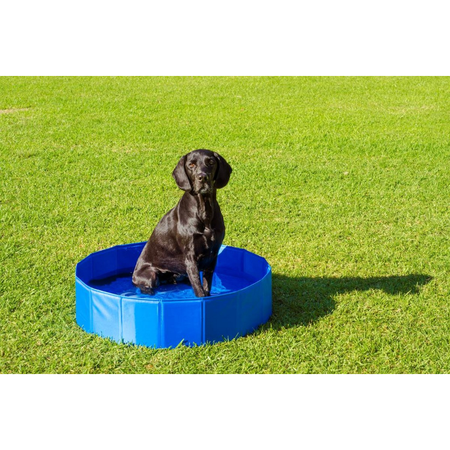 Buddy & Belle Pet Pool